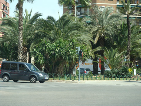 Palm trees in ibiza photo